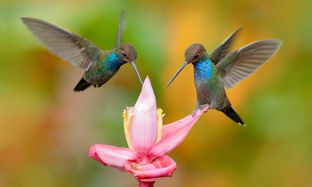 12 Tips on How to Attract Birds to Your Yard Fast | World Birds