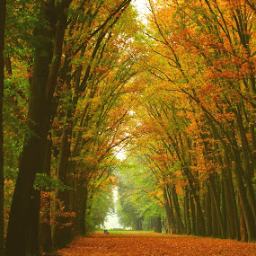 Fall by Gert de Vos - Landscapes Forests