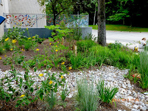 Photo: This garden at Green Glade School was created, in partnership with Credit Valley Conservation and Aquafor Beech to show the public how lovely a #rainscape (actually, an engineered bioretention cell to be precise) could be.  It worked.