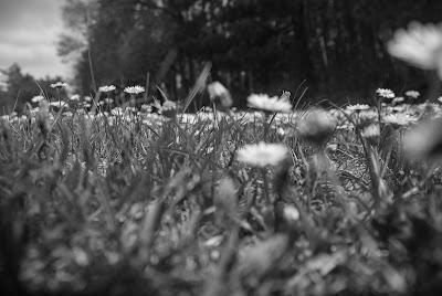 Odore di terra  di ferdibat