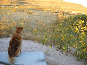 Photo: Koko wonders, too