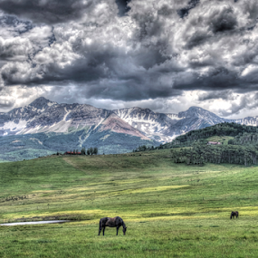 Ponies In The Meadow by Kent Moody - Landscapes Prairies, Meadows & Fields ( mountains, field, colorado, meadow, horses,  )