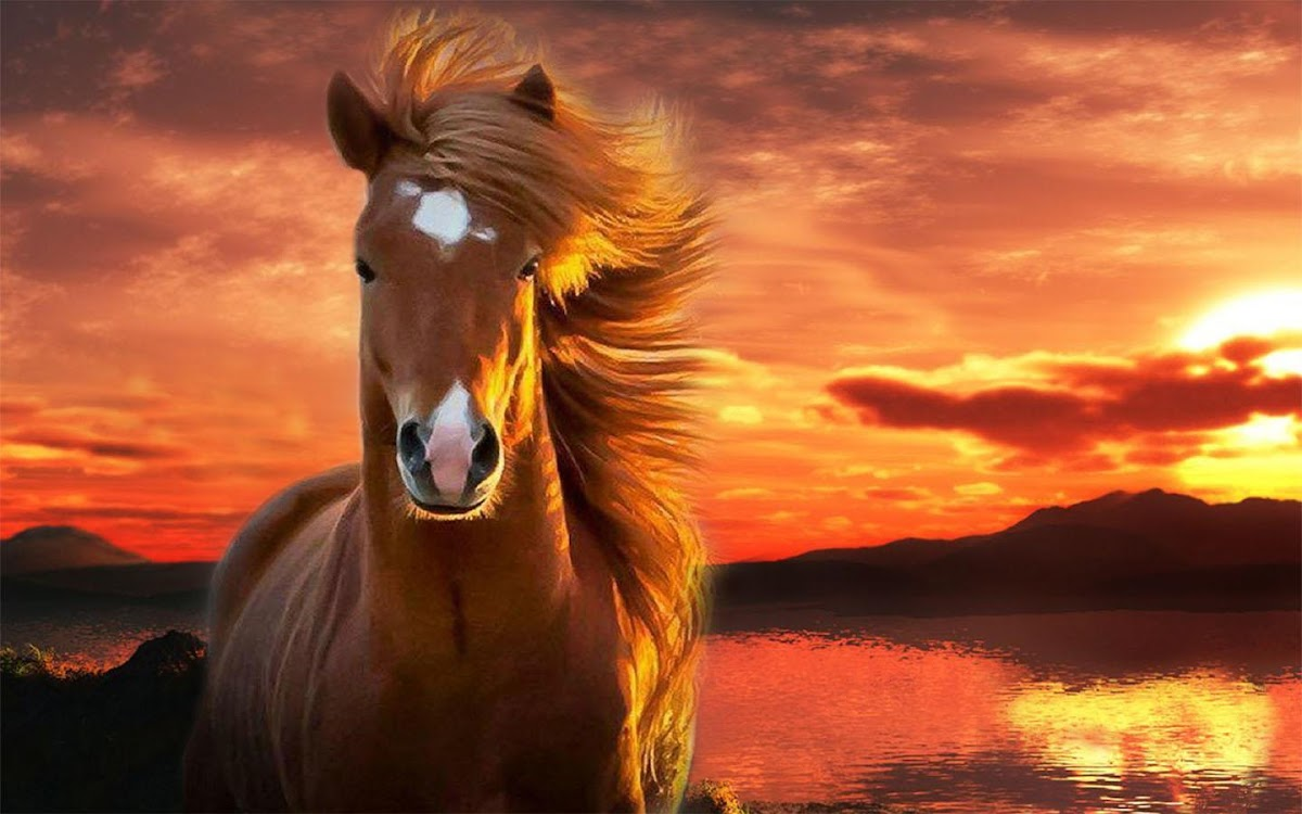 Horse Wallpapers Android Apps Appagg