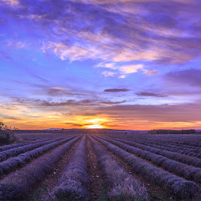 Lavender Sunset by Marcel de Groot - Landscapes Prairies, Meadows & Fields ( provence, clouds, field, orange, sky, purple, sunset, sundown, france, landscape, flowers, lavender )