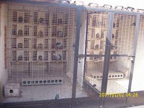 Photo: Otra vista de 2 de mis palomares de cría.