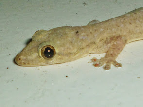 Photo: gekko