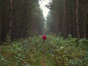 Photo: de herfstsfeer overal in de natuur