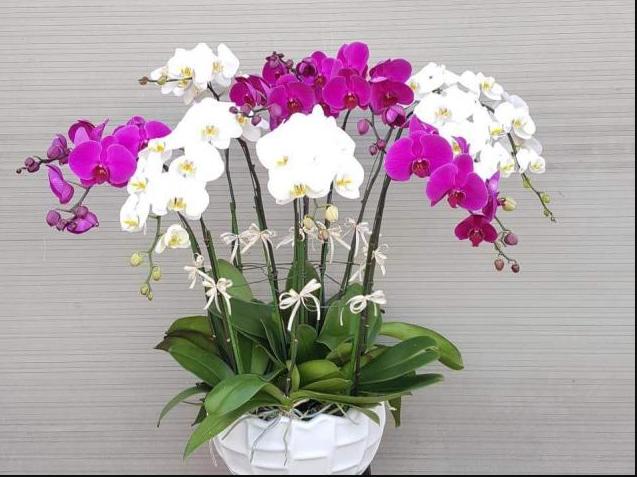 Bán hoa lan hồ điệp – những mẫu hoa chinh phục lòng người