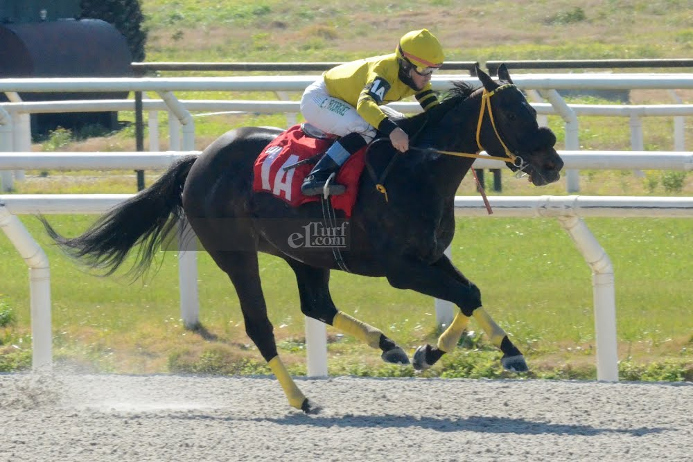 Shy Fund (Fund of Funds) se lleva Condicional (1000m-Arena-MAR).