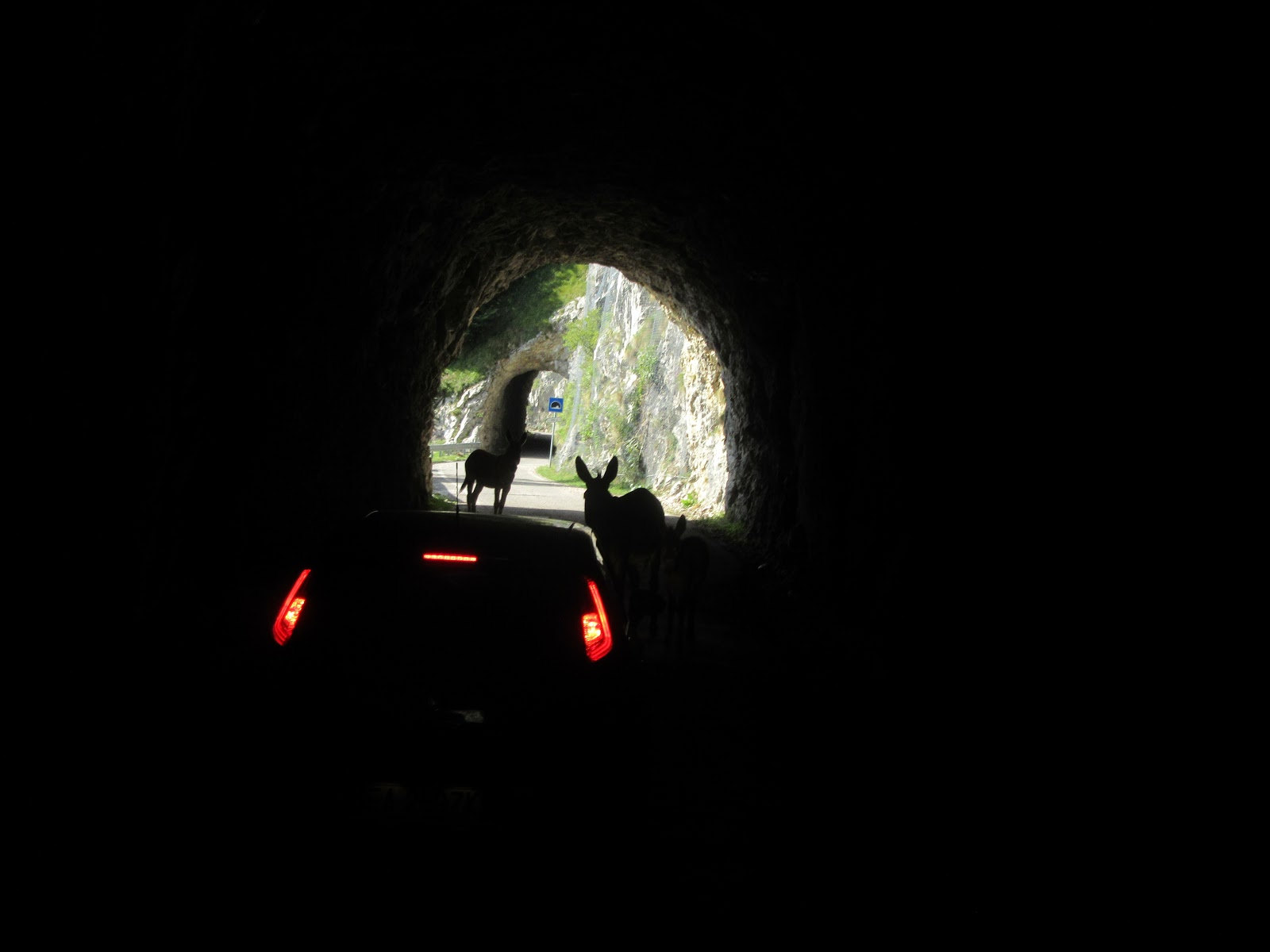 Cycling Monte Grappa - Cavaso del Tomba - tunnel with donkeys, mules  and car