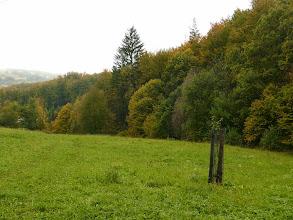 Photo: Stromy se začínají podzimně barvit