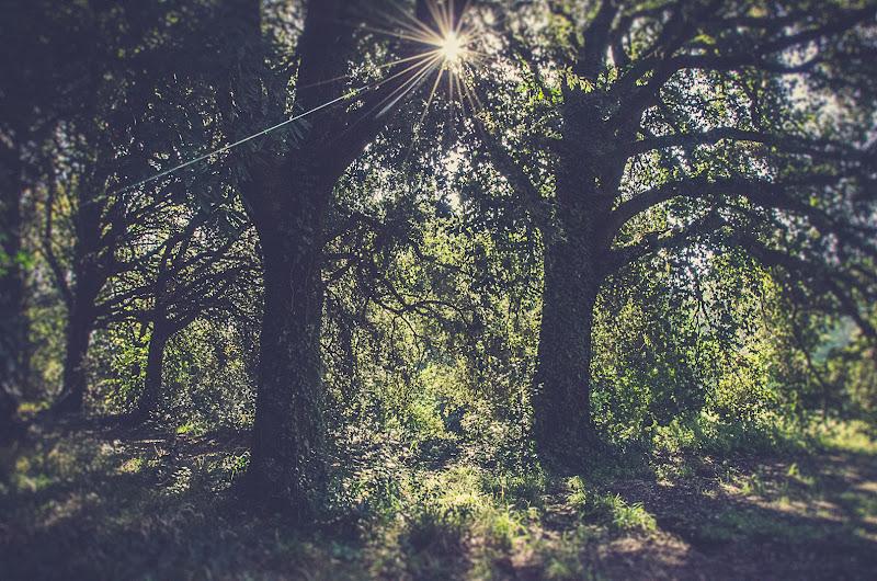 c'è una luce nel bosco di bibbi72
