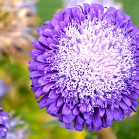 Blue & White by Umair Nayab - Flowers Single Flower ( white flower, green leaves, round, blue flower,  )