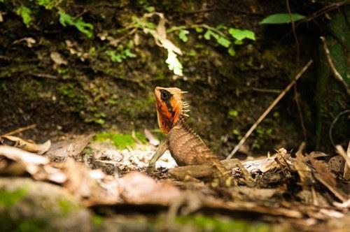 Vườn quốc gia Bạch Mã đẹp tựa tranh 7