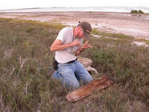 Photo: Examining drift wood at the edge of Laguna Madre