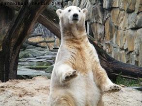 Photo: Knut schaut einmal, was sich ringsum so tut ;-)