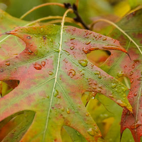 Fall Color by Wendy Alley - Nature Up Close Leaves & Grasses (  )