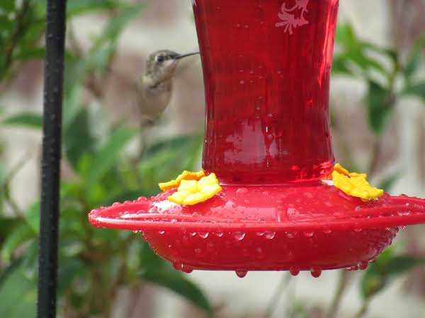 This Little One Was Guarding The Feeder Against All The Others