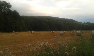 Photo: #harvest   all done :P