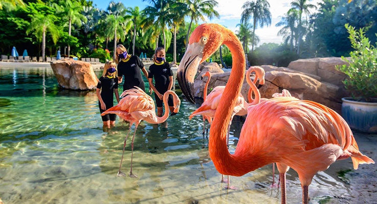 New Flamingo Experience at Discovery Cove