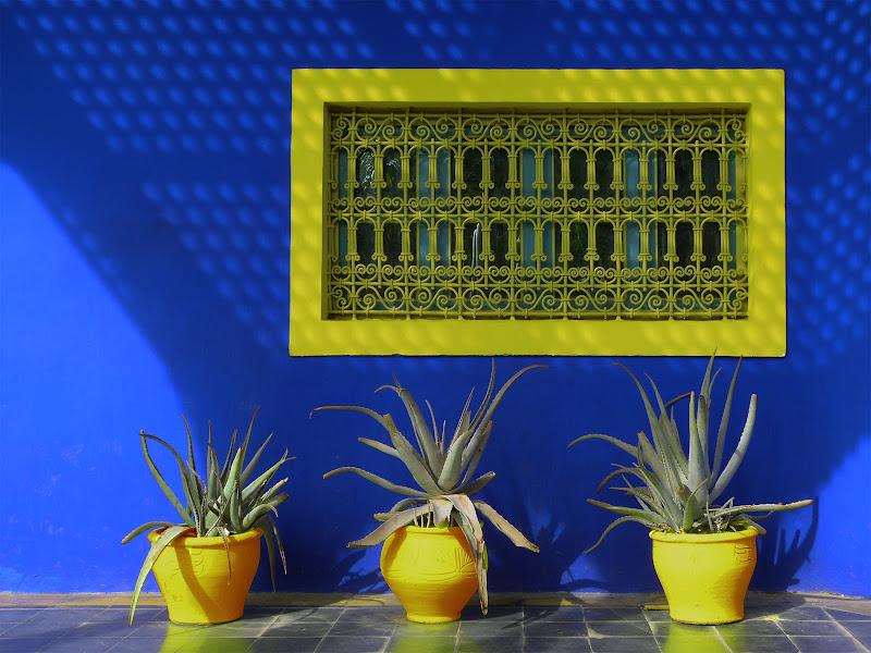 Una finestra sul giallo di Marta Brambilla