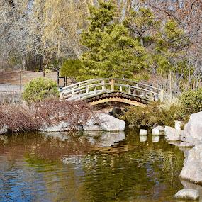 Botanical garden  by Gabriela Zandomeni - City,  Street & Park  City Parks ( water, bridge )