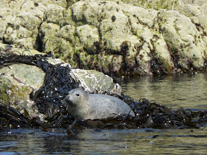 Photo: 6. Seal & Seaweed