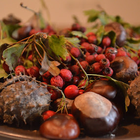 Autumn Fruits by Alexandru Bogdan Grigore - Nature Up Close Other Natural Objects ( chestnut, autumn, nuts, leaves )