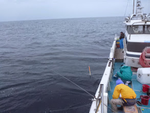 Photo: 今日は、昼からシケの予報。 午前中にバタバタ魚が食います様に・・・