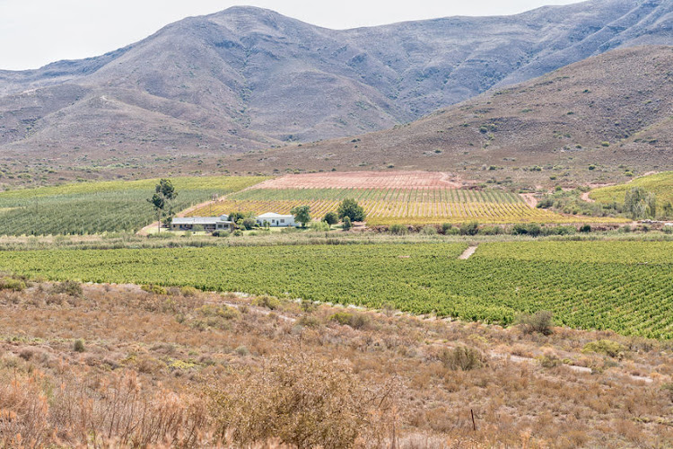 Vineyards in Bonnievale, where an elderly couple has been murdered on a farm.