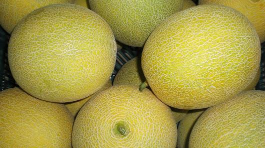 Asaja denuncia la bajada de precios del melón y la sandía esta semana
