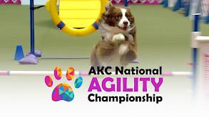 AKC Agility National Championship thumbnail