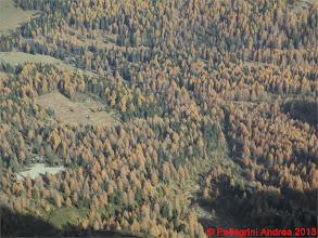 Photo: IMG_4462 giallo e verde nel bosco