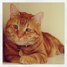 Photo: Mr. Charlie's portrait #intercer #cat #cats #pet #pets #animal #beautiful #pretty #sweet #learn #petsofinstagram #catsofinstagram #paw #paws #ears #white #orange #color #colour #eye #face #funny #portrait #look - via Instagram, http://instagram.com/p/esMc9kpfoT/