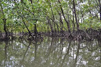 Photo: Magical mangroves