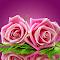 aIMG_2892.jpg