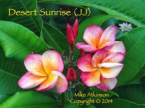 Photo: Desert Sunrise (JJ) - San Diego, CA - East San Diego County