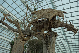 Photo: Magnifiques structures en bois !