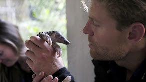 Vietnam's Endangered Animals thumbnail