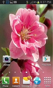 Pink Flower Swing LWP screenshot 1