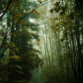by Hendrik Mändla - Landscapes Forests