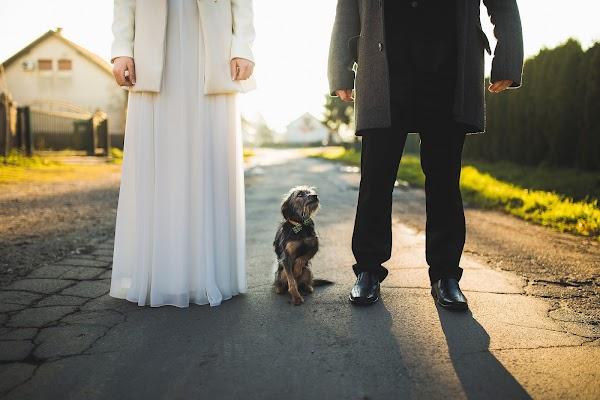 Wedding photographer Hrvoje Golubić (golubi). Photo of 05.07.2015