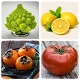Fruits and Vegetables, Berries : Picture - Quiz Android apk