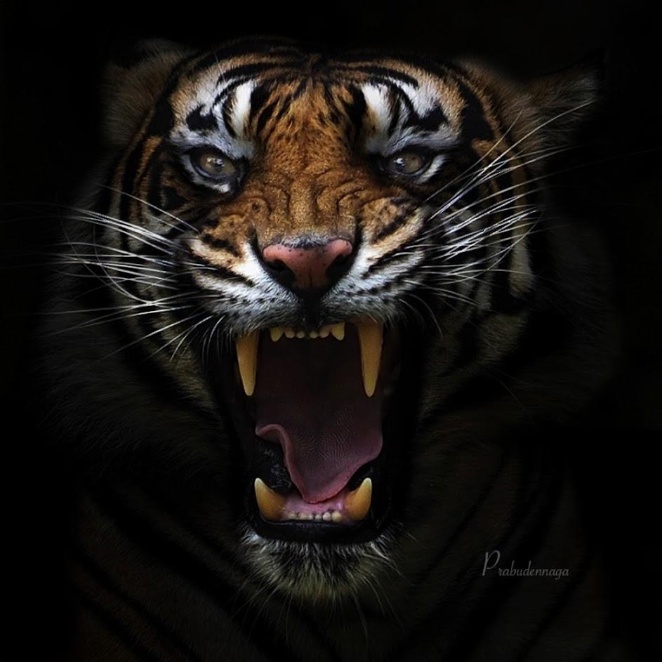 SGCenb 1xOnXTeDQYA1NjFRAw1c6ZihsS6HJQHctktA=s943 no - Один день в тигровой майке