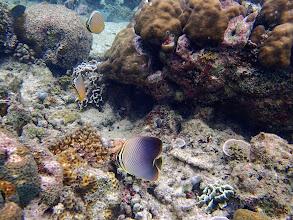 Photo: Miniloc Island Resort reef, Palawan, Philippines.
