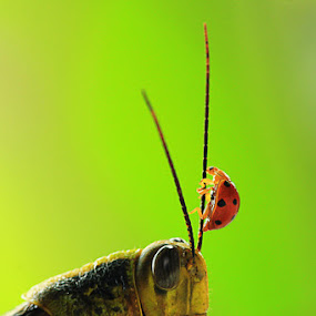 Climbing by Andi Halil - Animals Insects & Spiders