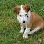 Wee Willie Winkie by Ingrid Bjork - Animals - Dogs Puppies ( portrait, dog )