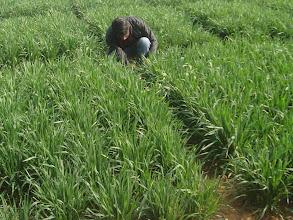 Photo: FAYA Programme Coordinator RB Khadka observing a field 2011 [Photo provided by RB Khadka]