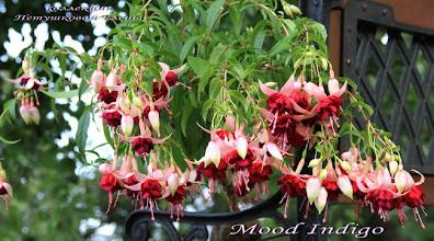 Photo: Mood Indigo