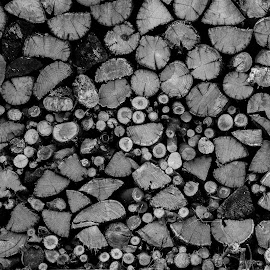 drva by Dušan Gajšek - Abstract Patterns